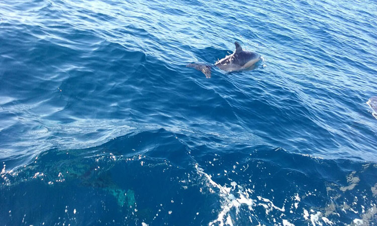 delfin 3