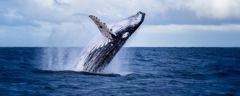 El varamiento de la ballena en Sopelana, un hecho aislado