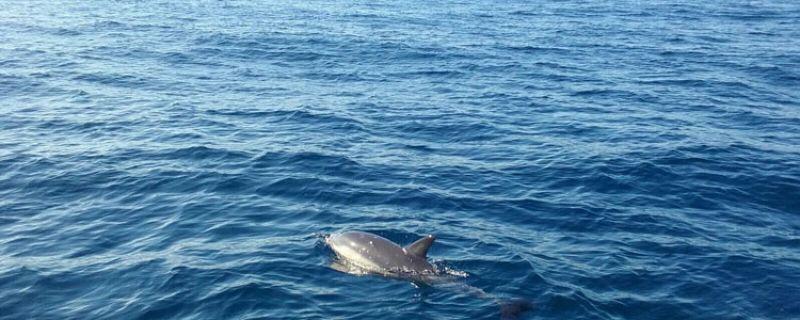 Avistamiento de cetáceos en el Golfo de Vizcaya