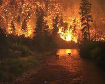 Incendios forestales, una lacra