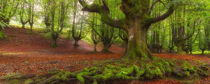 Los 55 espacios naturales vascos de mayor valor ecológico, de un vistazo