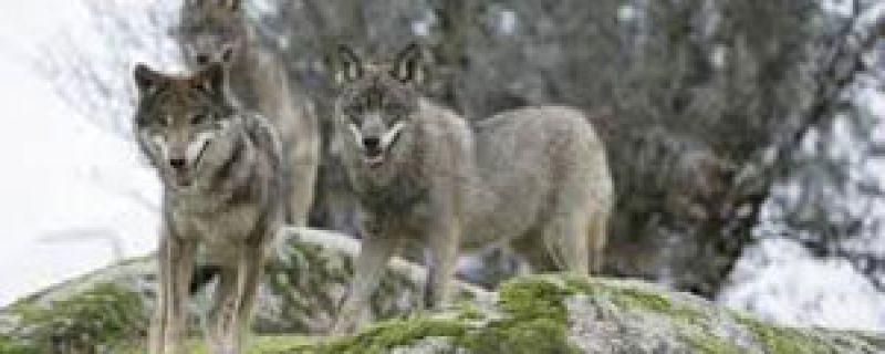 Cómo actuar ante un animal salvaje en la montaña