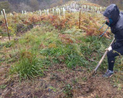 Lurgaia, mucho más que plantar árboles