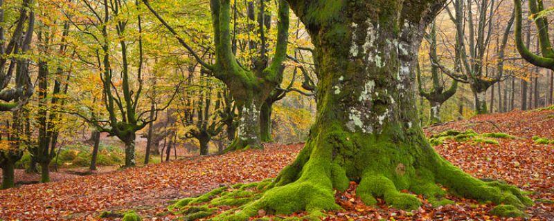 La restauración de los bosques autóctonos del País Vasco