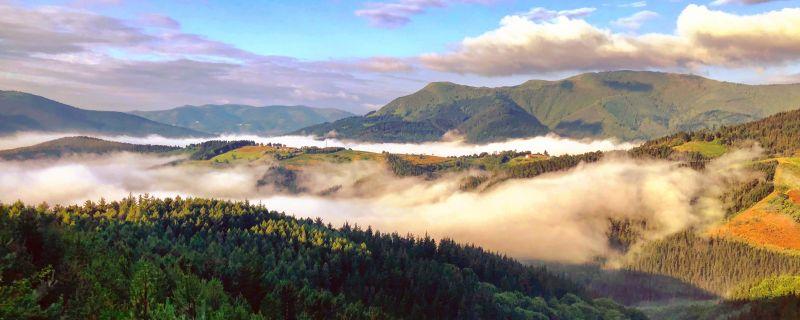 Instituciones y sector forestal se alían contra la enfermedad del pino