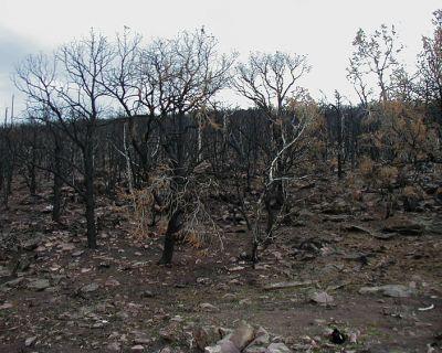La reforma de la Ley de Montes que permite recalificar áreas quemadas