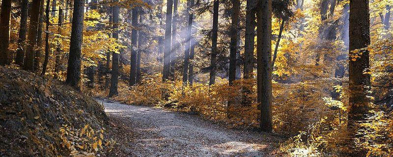 Montañas y bosques para disfrutar en otoño