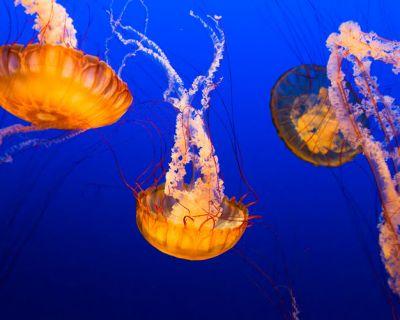 Lo que debes saber sobre la presencia de medusas en las playas